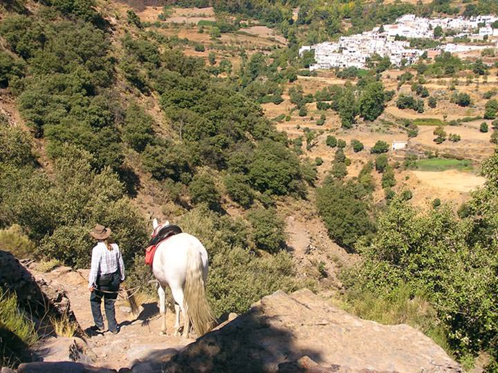 sierra nevada mountains, Incredible Andalucians, In The Saddle, In The Saddle