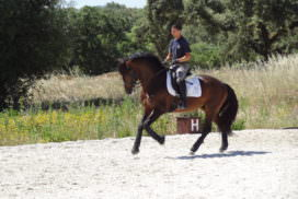 , Abbie, In The Saddle