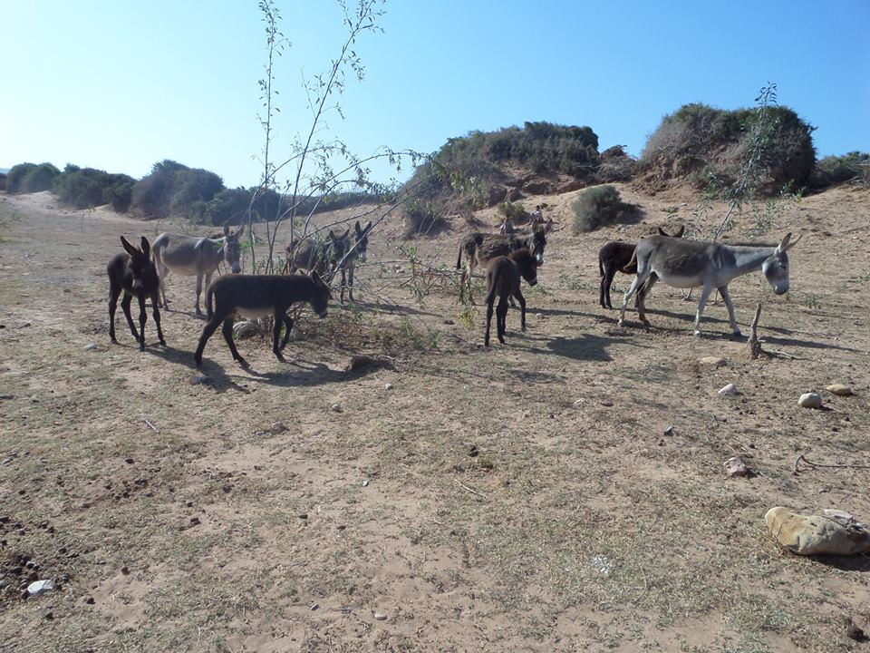 donkeys in morocco