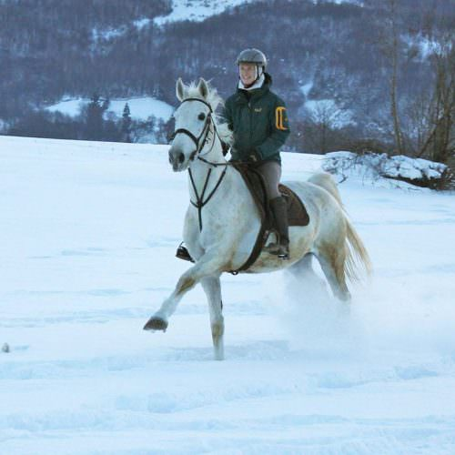 galloping in the snow. Winter Riding Holidays with In The Saddle. Equus Silvania .
