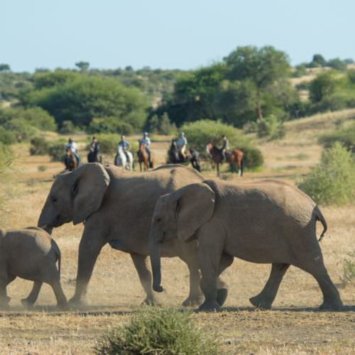 Elephants in the Tuli Block - Botswana