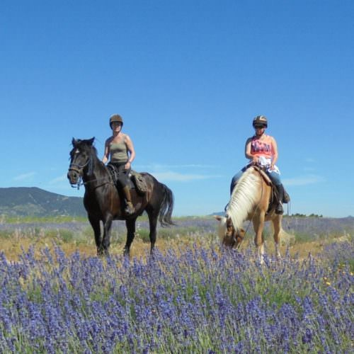 Riding through the lavendar in Provence