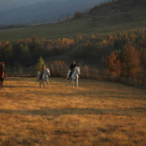 Cantering across fields. Riding holidays in Transylvania with In The Saddle.