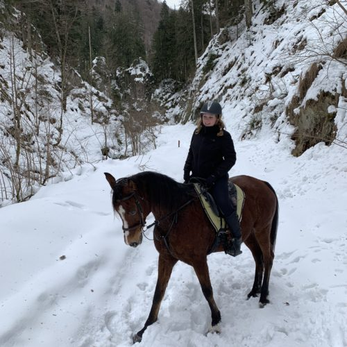 Winter Riding Holidays with In The Saddle. Equus Silvania. Horses in snow.