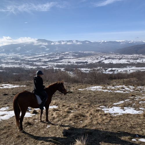 Winter Riding Holidays with In The Saddle. Equus Silvania. Horse in snow.