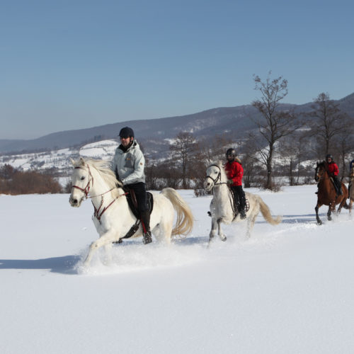 riding in the snow. Winter Riding Holidays with In The Saddle. Equus Silvania