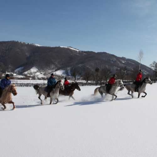 Winter Riding Holidays with In The Saddle. Equus Silvania. Horses galloping in snow.