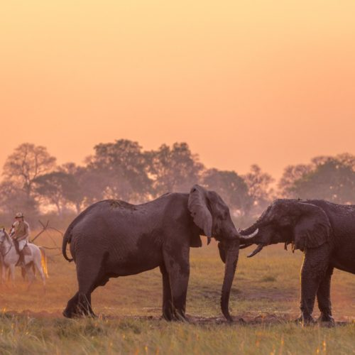Macatoo. Horses and elephants at sunset.