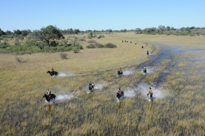 Splashy canter through the Okavango Delta