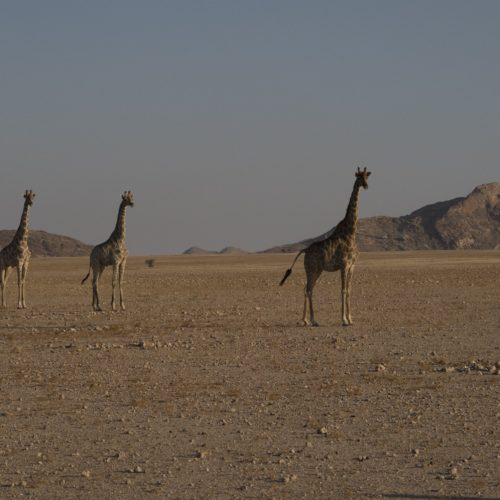 Game sightings Namibia