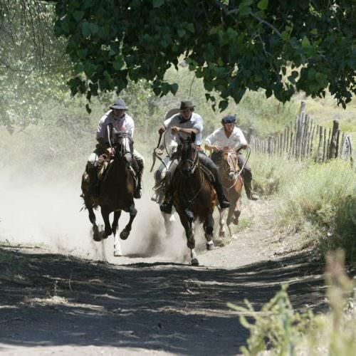 Horses galloping in Argentina
