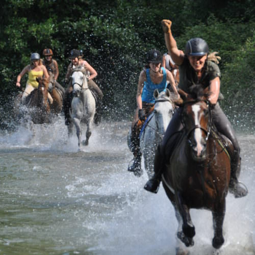 Horses cantering through water