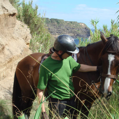 Azores riding holidays. Guest photos. Horse.