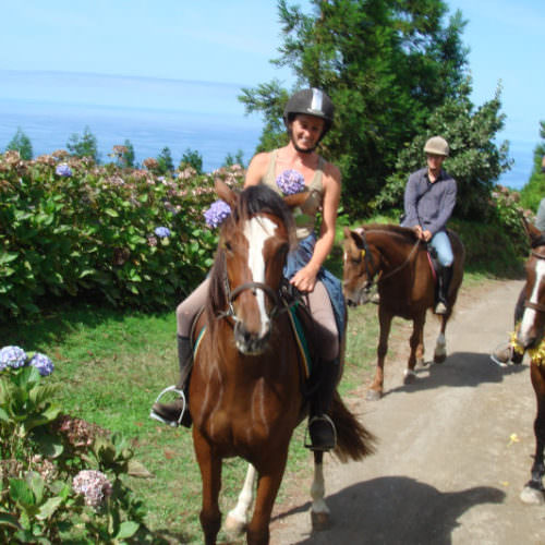 Azores riding holidays. Guest photos of horses