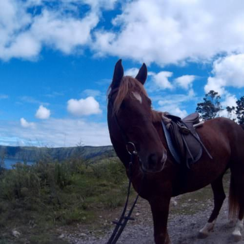 Azores riding holidays. Guest photos.