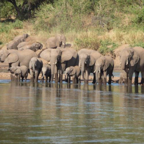 Tuli Trail mobile horseback safari holiday. Riding in Botswana. Elephant at the Limpopo river