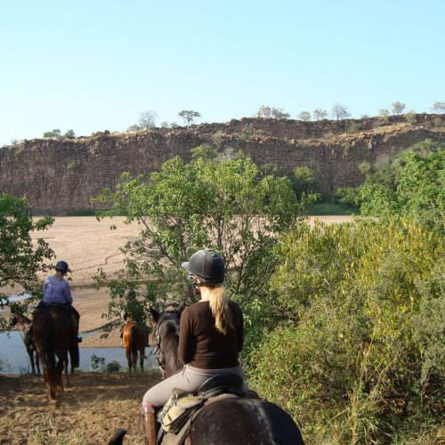 Tuli Trail mobile horseback safari holiday. Riding in Botswana. Horses on the banks of the Limpopo River.