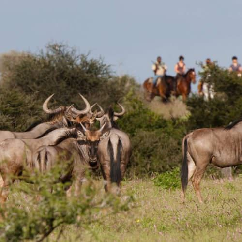 Tuli Trail mobile horseback safari holiday. Riding in Botswana. Watching game from horses.