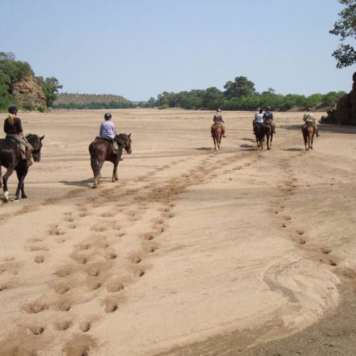 Tuli Safari mobile horseback safari holiday. Riding in Botswana. Horses walking along dried Limpopo river bed.