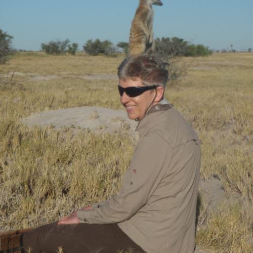 The Kalahari Riding Safari in the Makgadikgadi salt pans of Botswana. Meerkats