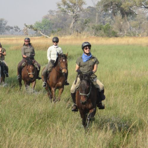 Kujwana riding safari exploring the western region of Botswana's Okavango Delta. Horses.