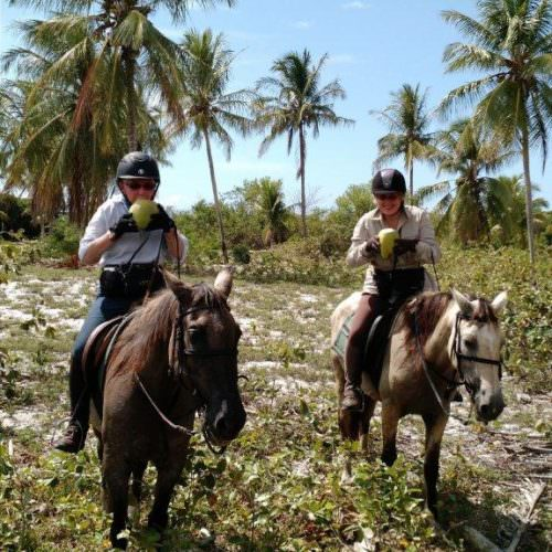 Riding Holidays in Brazil. Beach riding in Bahia. Coconuts on horseback