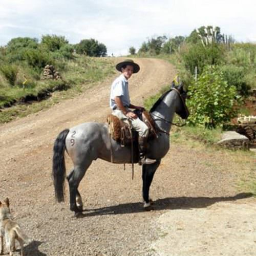 Riding Holidays in Brazil. Trail riding vacation. Horses and rider.