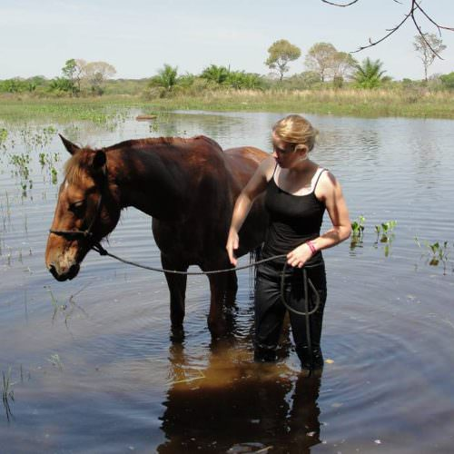 Trail riding holidays in the Pantanal, Brazil. Horse in the water.