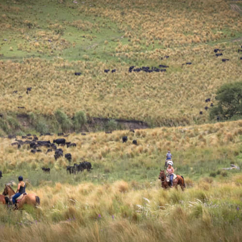 Cattle round-up, Argentina. Horse riding at Los Potreros