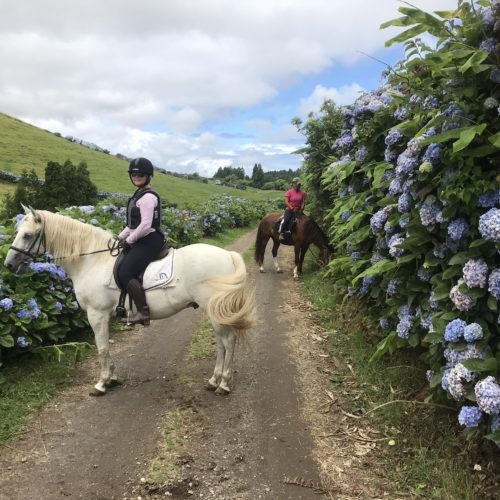 Learn to Ride Holidays on the Azores. Beautiful Hydrangeas. Flowers