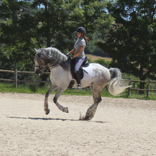 A guest cantering on Zeus.
