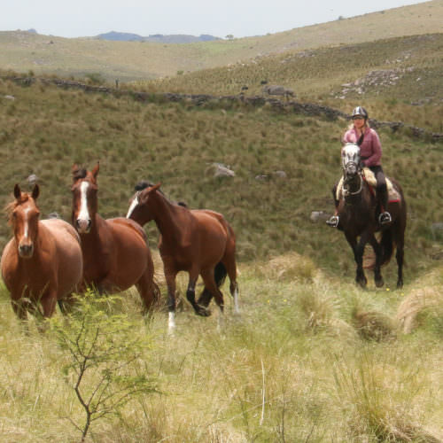 Horse round-up, Argentina. Riding Holidays at Los Potreros