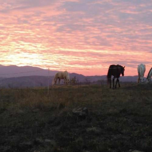 Riding holidays in Transylvania with In The Saddle. Horses at sunset.