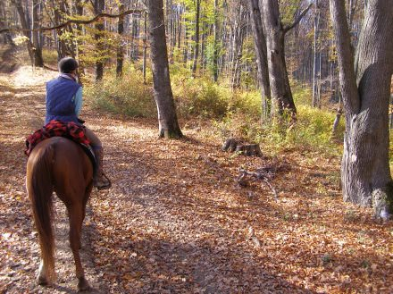 Riding holidays in Transylvania with In The Saddle. Horse in the woods.