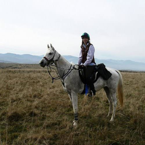 Riding holidays in Transylvania with In The Saddle. Grey horse.