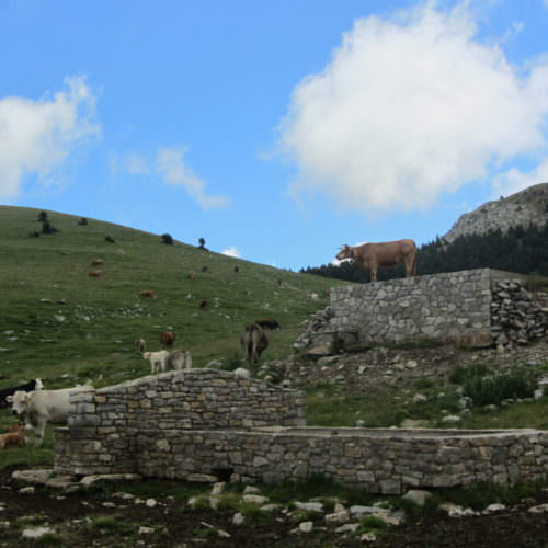 Adventurous trail riding holiday through the Pyrenees Mountains, Spain. Cattle, spectacular views, blue skies.