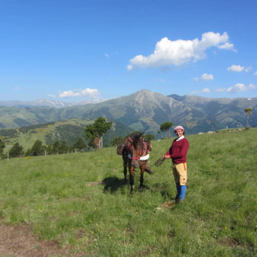 Horses crossing between Spain, France and Andorra. Grassy meadows
