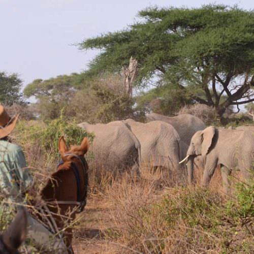 Tanzania elephants in thick bush