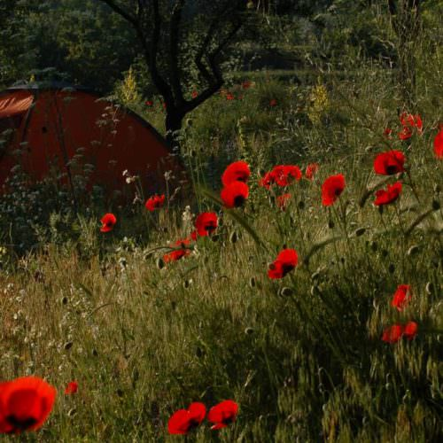 Camping and hotel based horse riding holidays in Turkey. Poppies
