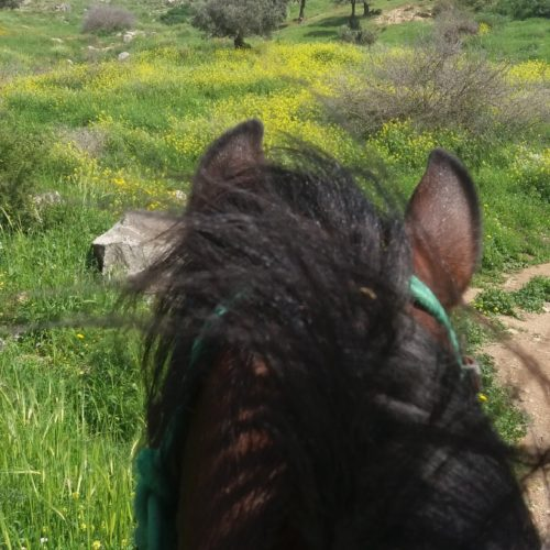Israel riding trail