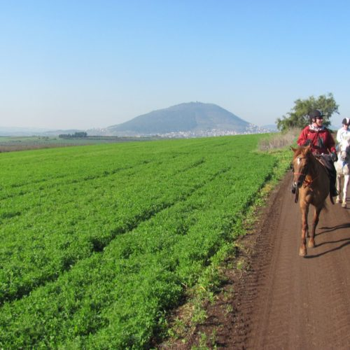 Horse riding in Israel
