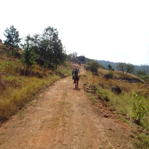 Cantering in Swaziland
