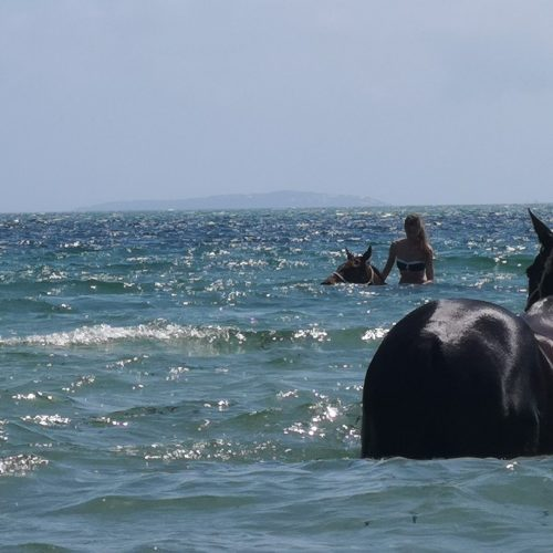 swimming with horses in Mozambique