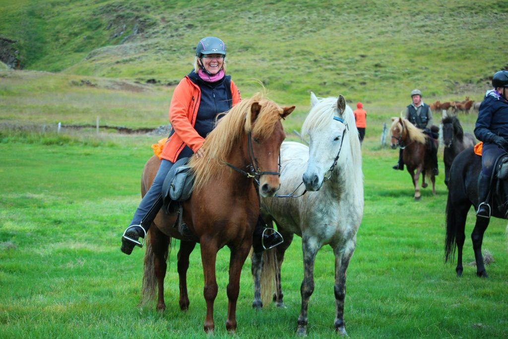 Iceland lead horse