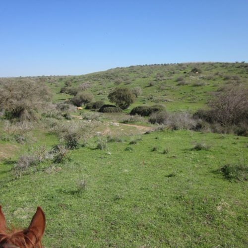 Israel riding Galilee