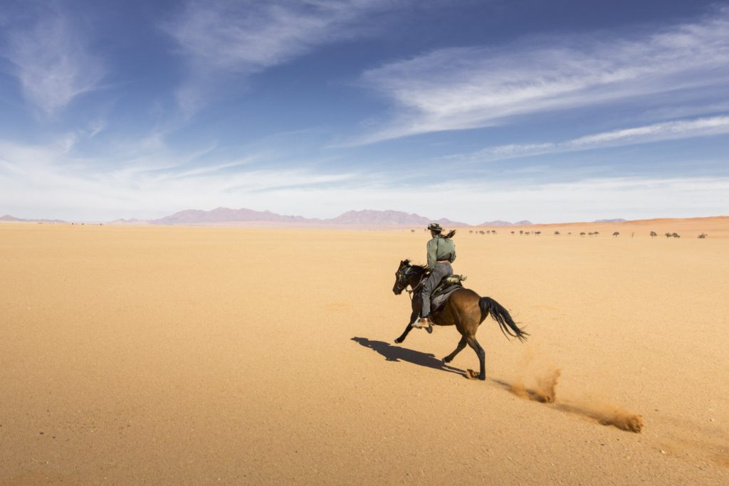 Cantering across the namib