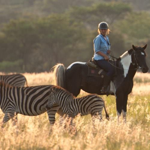 Zebra at Horizon