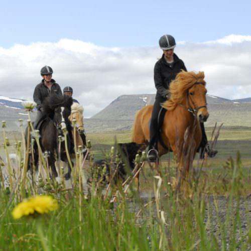 Riding with Hestasport, Iceland
