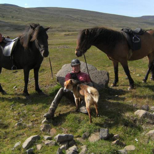 Iceland horses and dogs