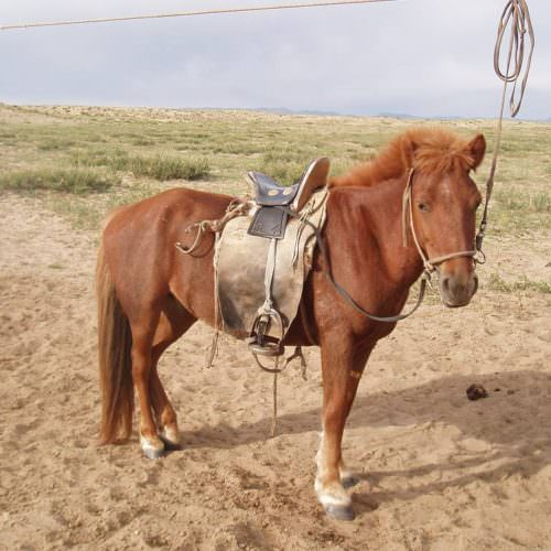 Mongolia horse saddle